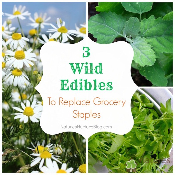 Wild Edibles to Replace Grocery Staples