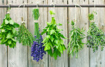 Herbalism and Essential Oils