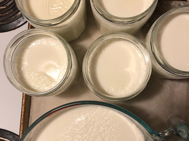 Making homemade yogurt is easier, cheaper, and healthier than store-bought! Try this recipe for plain yogurt and learn how to make thick Greek yogurt too!