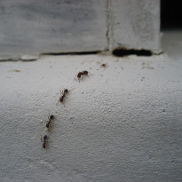Natural Ways to Keep Pests Out