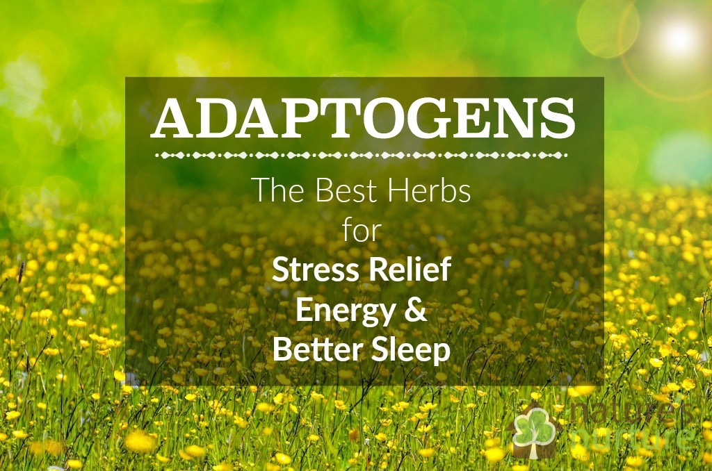 Adaptogenic Herbs for Stress Relief, Energy, and Better Sleep