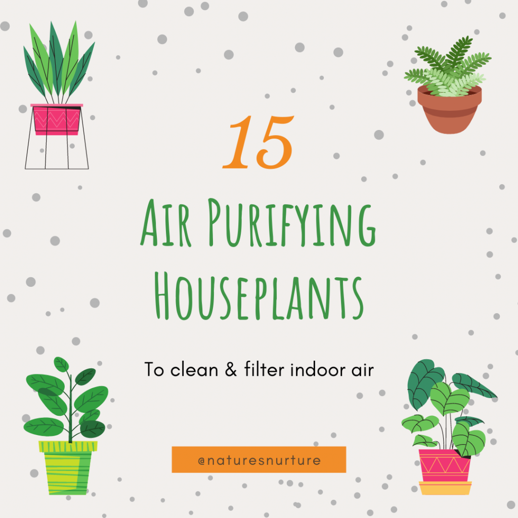 A great way to improve the air quality in your home is to add some air purifying houseplants! Not only do they look beautiful, but houseplants can also clean and filter indoor air to remove toxins, as well as reduce mould spores and bacteria.
