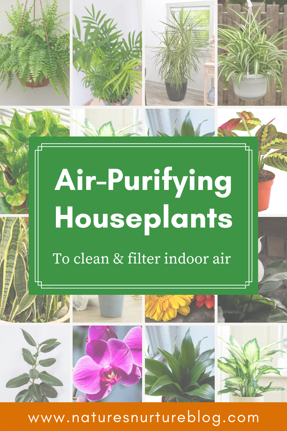 Air Purifying Houseplants to Clean & Filter Indoor Air